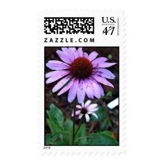 Spotted Echinacea Flower Postage