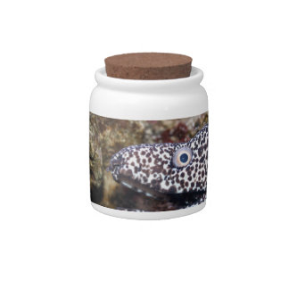 spotted eel right side aquarium animal candy jar