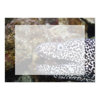 spotted eel right side aquarium animal card