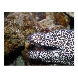 spotted eel right side aquarium animal postcard