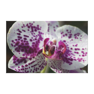 Spotted Flower Canvas Canvas Print