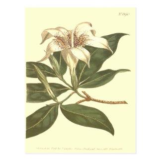 Spotted Flowered Gardenia Illustration Postcard