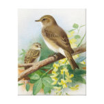 Spotted Flycatchers Gallery Wrap Canvas