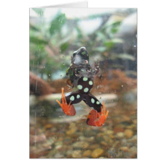 Spotted frog notecard