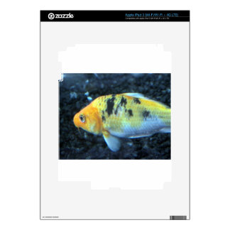 Spotted Goldfish Skin For iPad 3
