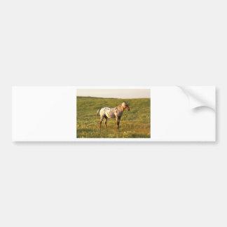 Spotted Horse Stallion Bumper Sticker
