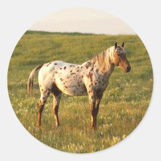 Spotted Horse Stallion Classic Round Sticker