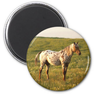 Spotted Horse Stallion Magnet