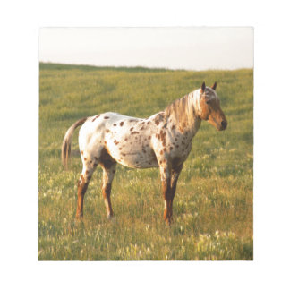 Spotted Horse Stallion Notepad