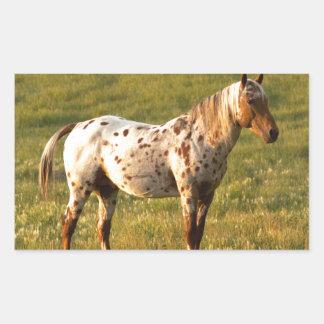 Spotted Horse Stallion Rectangular Sticker