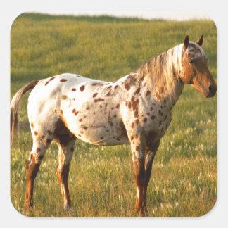 Spotted Horse Stallion Square Sticker