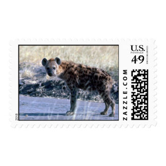 Spotted Hyaena Postage Stamps