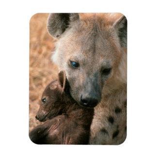 Spotted Hyena (Crocuta Crocuta) With Pup Magnet