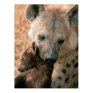 Spotted Hyena (Crocuta Crocuta) With Pup Postcard