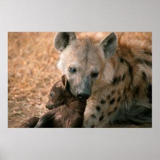 Spotted Hyena (Crocuta Crocuta) With Pup Poster