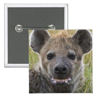 Spotted Hyena portrait, Crocuta croduta, Masai Button