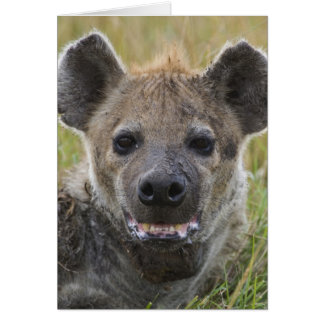 Spotted Hyena portrait, Crocuta croduta, Masai Card