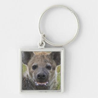 Spotted Hyena portrait, Crocuta croduta, Masai Keychain