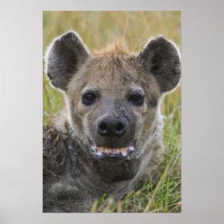 Spotted Hyena portrait, Crocuta croduta, Masai Poster