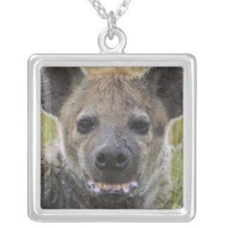 Spotted Hyena portrait, Crocuta croduta, Masai Silver Plated Necklace