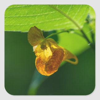 Spotted Jewelweed Wildflower Square Stickers