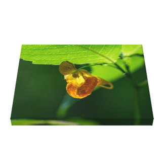 Spotted Jewelweed Yellow Wildflower Canvas Print