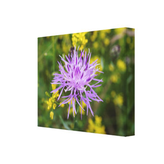 Spotted Knapweed Purple Wildflower Canvas Print