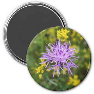 Spotted Knapweed Purple Wildflower Round Magnet