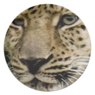 Spotted Leopard Plate