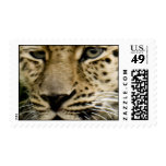 Spotted Leopard Postage Stamp
