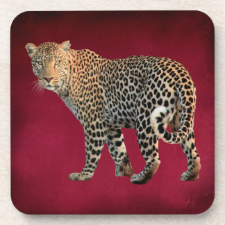 Spotted Leopard Wild Cat Photograph Beverage Coaster