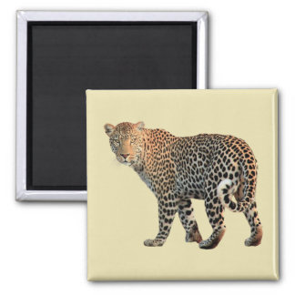 Spotted Leopard Wild Cat Photograph Magnet