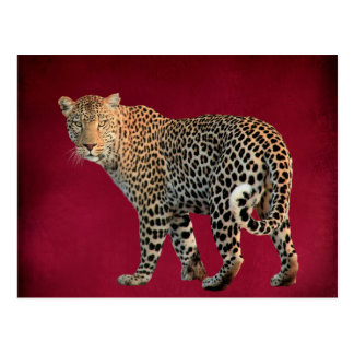 Spotted Leopard Wild Cat Photograph Postcard