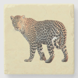 Spotted Leopard Wild Cat Photograph Stone Coaster