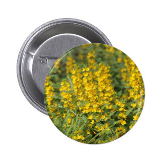 Spotted loosestrife (Lysimachia punctate). Button