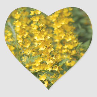 Spotted loosestrife (Lysimachia punctate). Heart Sticker