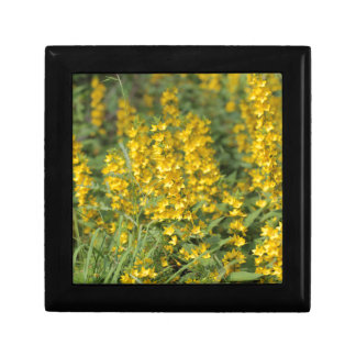Spotted loosestrife (Lysimachia punctate). Jewelry Box