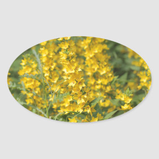 Spotted loosestrife (Lysimachia punctate). Oval Sticker