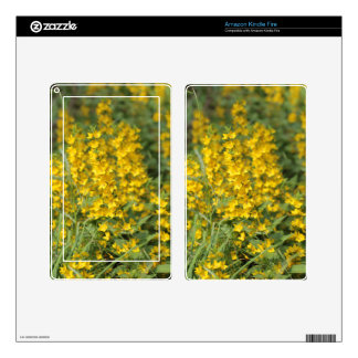 Spotted loosestrife (Lysimachia punctate). Skins For Kindle Fire