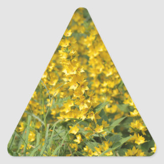 Spotted loosestrife (Lysimachia punctate). Triangle Sticker