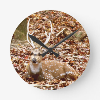 Spotted Male Buck Deer With Antlers in Fall Forest Round Clock