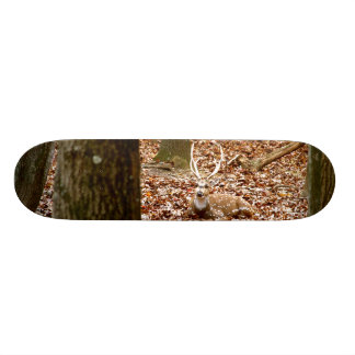 Spotted Male Buck Deer With Antlers in Fall Forest Skate Boards