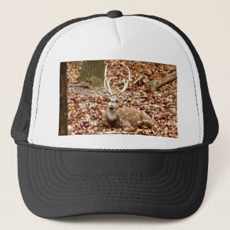 Spotted Male Buck Deer With Antlers in Fall Forest Trucker Hat