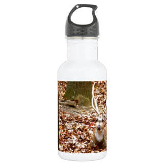 Spotted Male Buck Deer With Antlers in Fall Forest Water Bottle