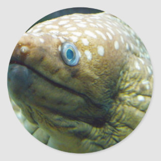 Spotted Moray Eel Classic Round Sticker