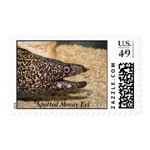 Spotted Moray Eel Stamps