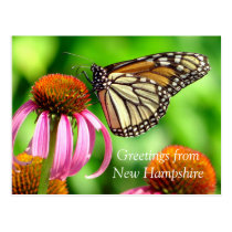 Spotted Orange Butterfly_Greetings from NH Postcard