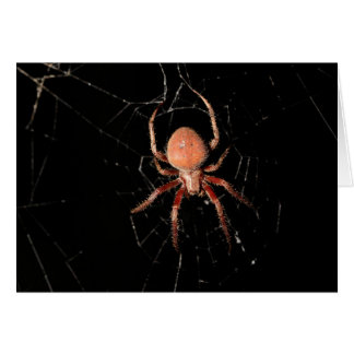 Spotted Orb Weaver Spider Card
