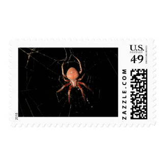 Spotted Orb Weaver Spider Postage