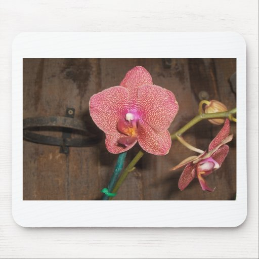 spotted orchid mouse pad